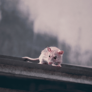 mouse on gutter