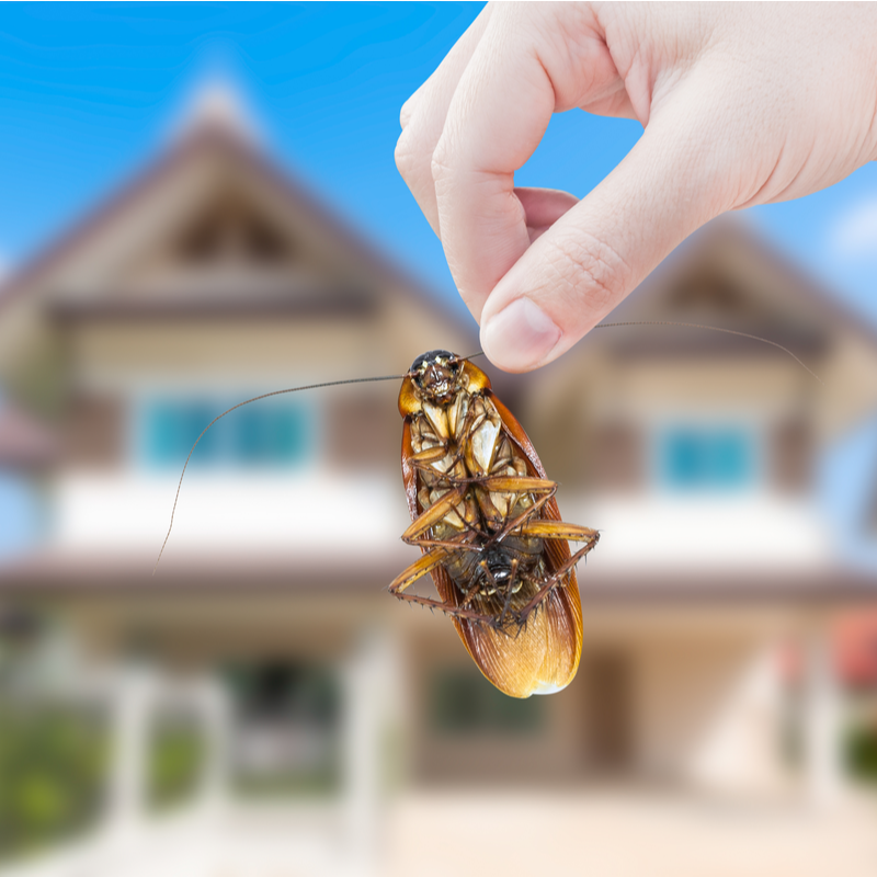 cockroach in hand